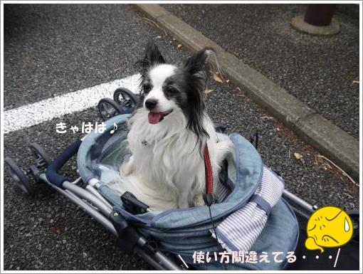 027_convert_20121015121739.jpg