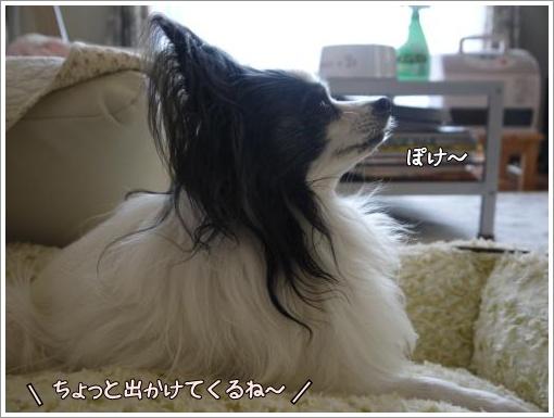 027_convert_20121217130152.jpg