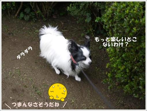029_convert_20121016121355.jpg
