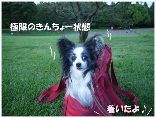 030_convert_20120910092803.jpg