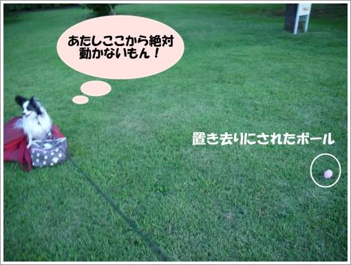 031_convert_20120910093049.jpg