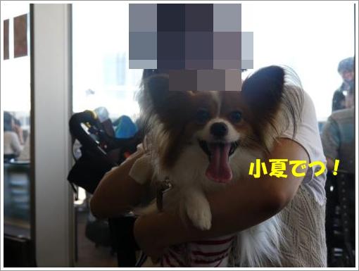 033_convert_20120827121810.jpg