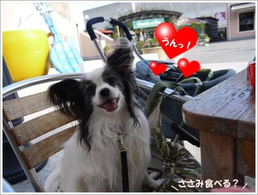 034_convert_20121002121820.jpg