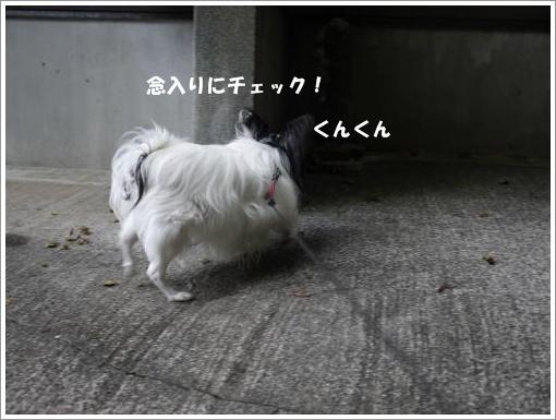 034_convert_20121009123019.jpg