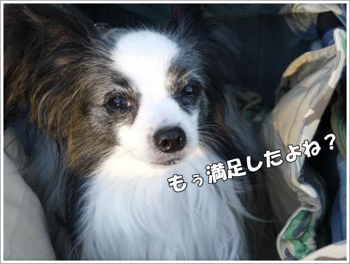 035_convert_20121022123048.jpg