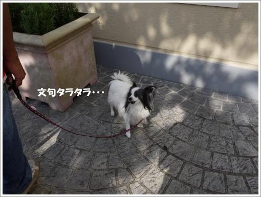 037_convert_20121002122456.jpg