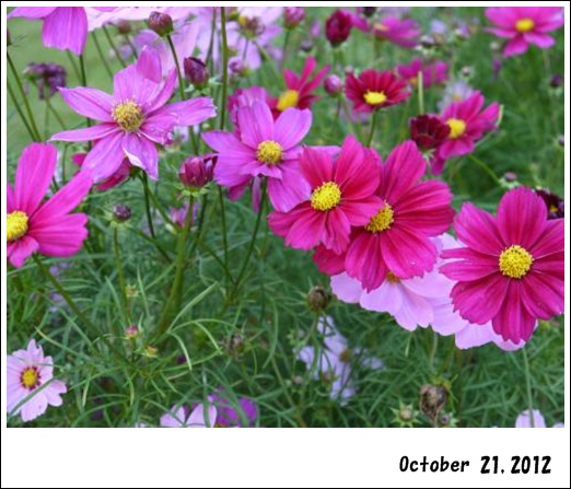 038_convert_20121023134933_20121024132916.jpg