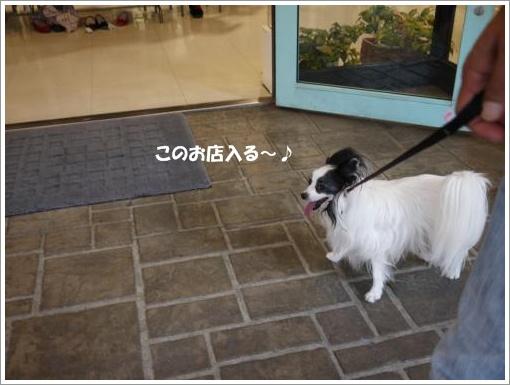 039_convert_20121002122709.jpg