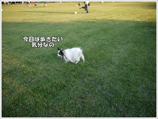 041_convert_20121023132752.jpg