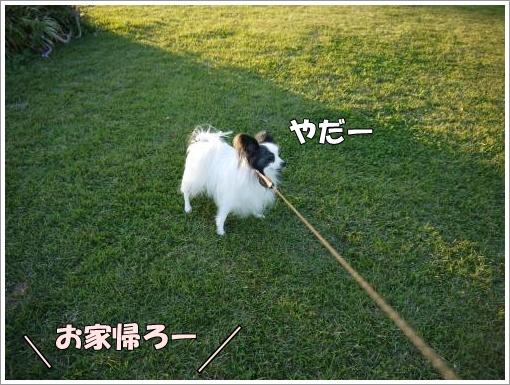 042_convert_20121023132958.jpg