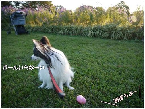 043_convert_20121023132543.jpg