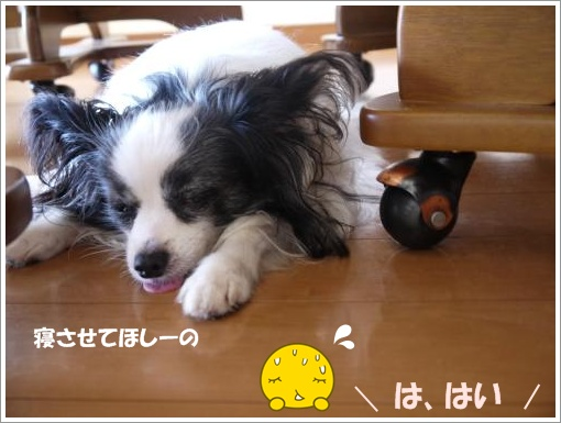 045_convert_20120913121430.jpg