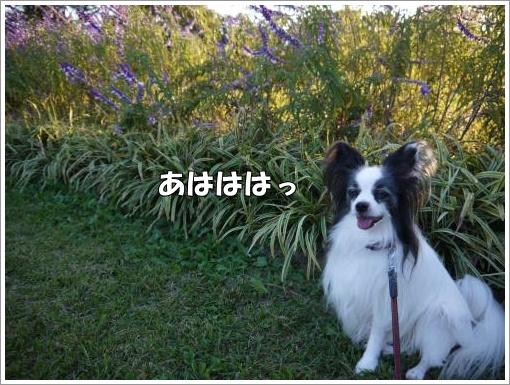 047_convert_20121023132007.jpg
