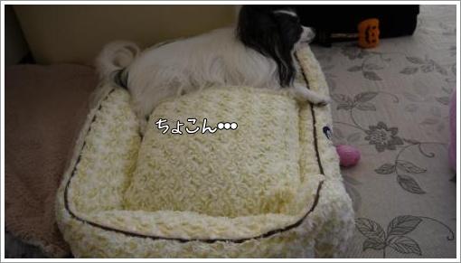 047_convert_20121030140714.jpg