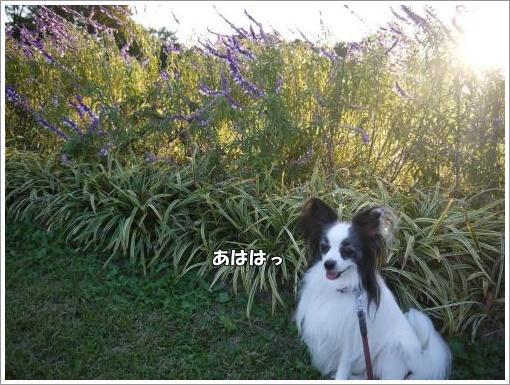 048_convert_20121023132239.jpg