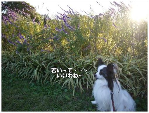 049_convert_20121023125948.jpg
