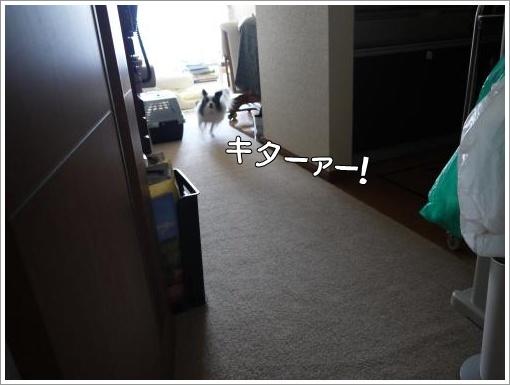 050_convert_20121120123722.jpg