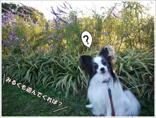 052_convert_20121023141724.jpg