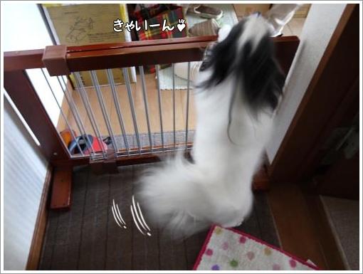 052_convert_20121120125052.jpg