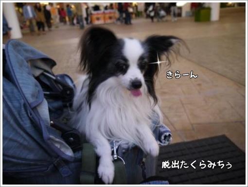 057_convert_20121107121851.jpg