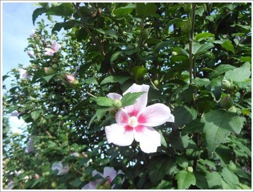 060_convert_20120717111653.jpg