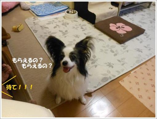 065_convert_20120710121516.jpg