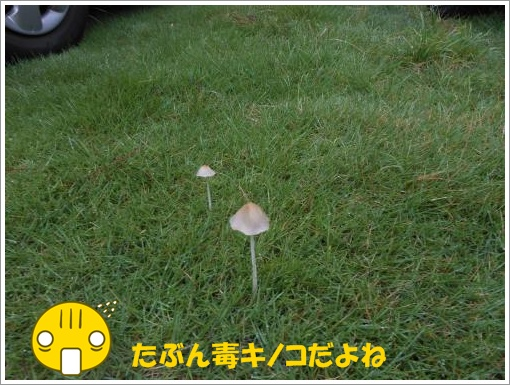 070_convert_20120730121846.jpg
