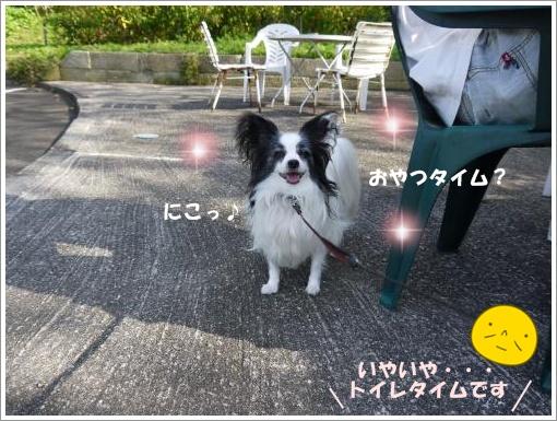 088_convert_20121011113535.jpg