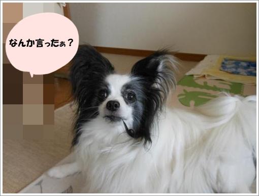 102_convert_20120712120923.jpg