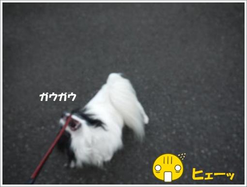 284_convert_20120824100408.jpg
