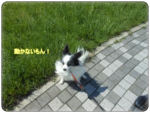 DSCN0528_convert_20120507163252.jpg