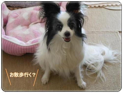 DSCN0552_convert_20120509113423.jpg