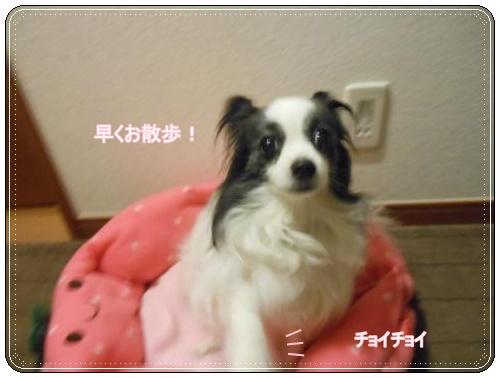 DSCN0568_convert_20120509114012.jpg