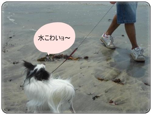 DSCN0720_convert_20120521121000.jpg