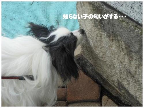 DSCN1122_convert_20120611093620.jpg
