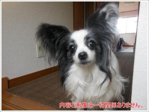 DSCN1157_convert_20120614112611.jpg