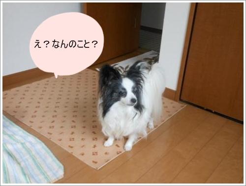 DSCN1174_convert_20120619130851.jpg