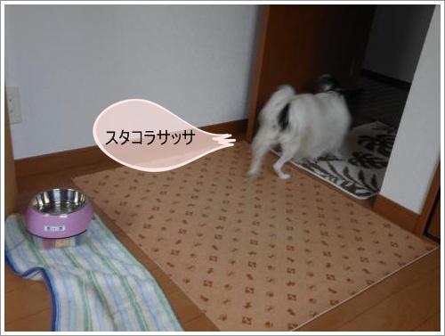 DSCN1175_convert_20120619131030.jpg