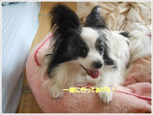 DSCN1186_convert_20120613124224.jpg