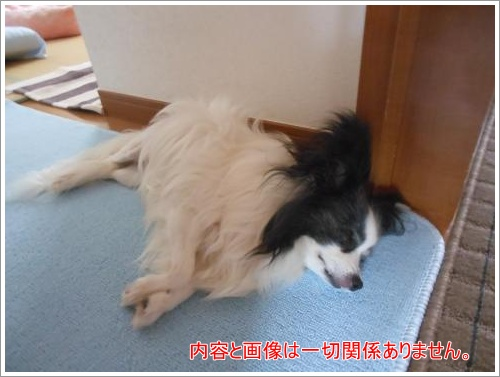 DSCN1197_convert_20120614113121.jpg