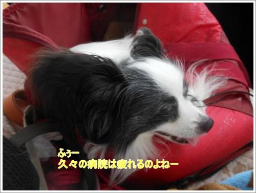 DSCN1224_convert_20120618104125.jpg