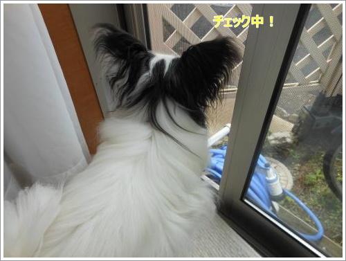 DSCN1268_convert_20120619122538.jpg