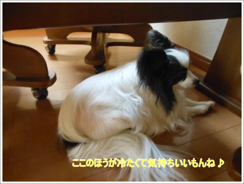DSCN1280_convert_20120618132213.jpg