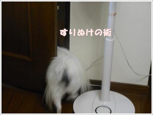 DSCN2026_convert_20120815084819.jpg