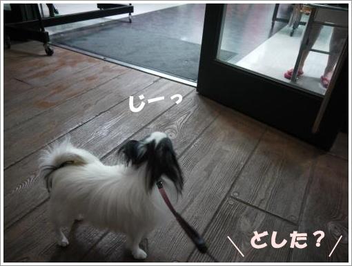P1000402_convert_20120917104101.jpg