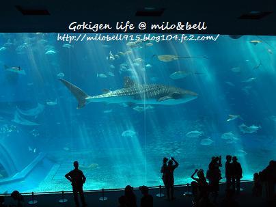 2012_0625_092332-P6255514ちゅら海水族館