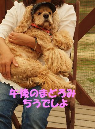 2012_0430_161314-P4304797.jpg