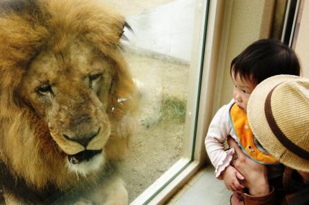 ライオンと - コピー