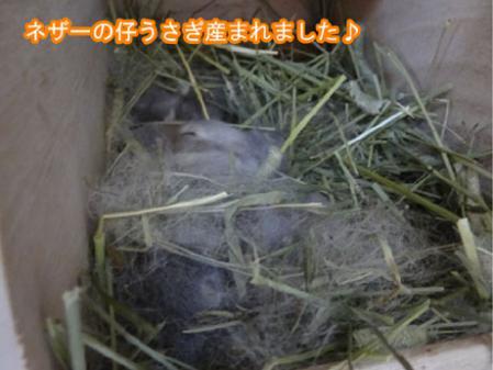 04_20120427170639.jpg