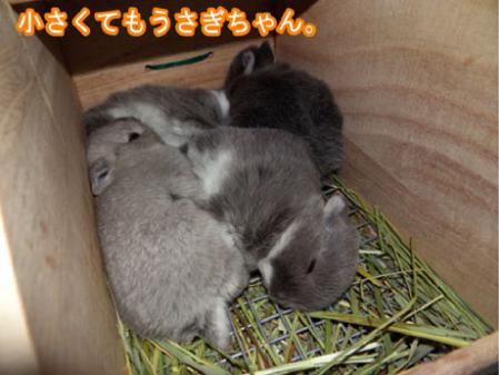 09_20120504181219.jpg